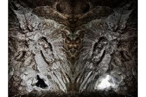 Petrified-Metamorphosis